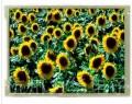 10.4寸TFT LCD屏 G104SN03 V1 用于UT-S3C6410开发板【北航博士店